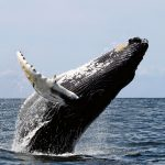 5 Best Whale Watching Destinations