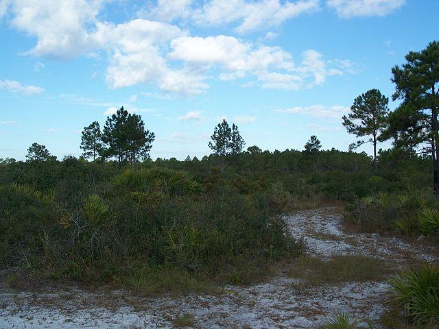 Florida _2