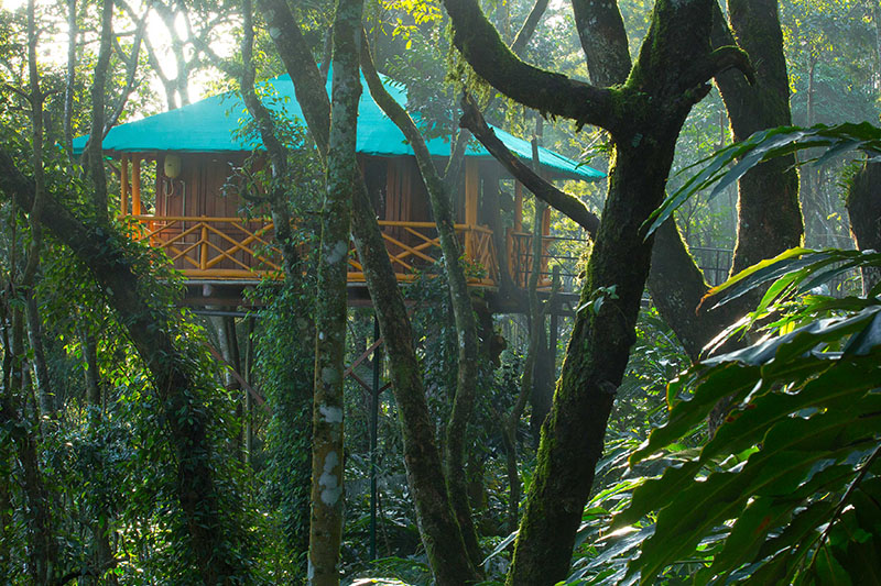 munnar estate tree house
