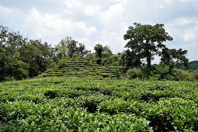 Tea And Coffee Estate