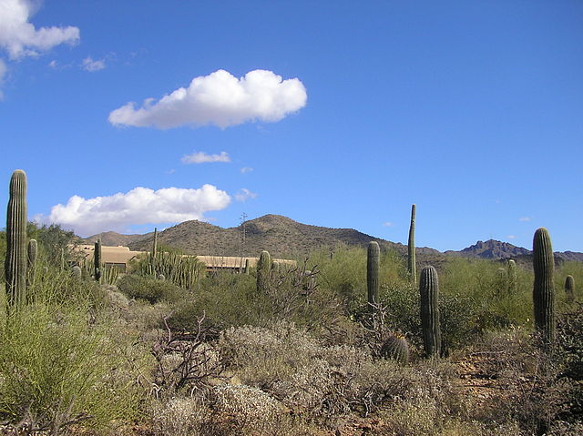 Sunny Destination Tucson
