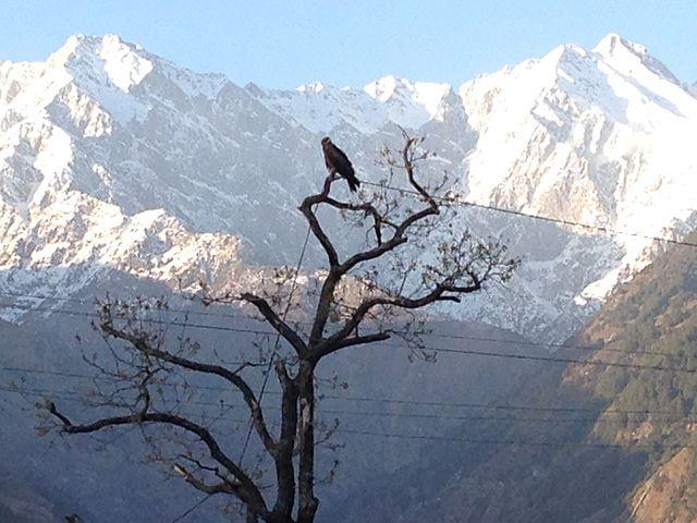 Himachal Pradesh _28
