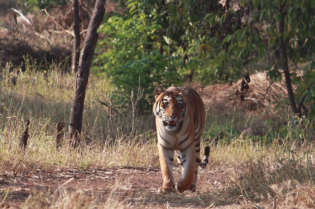 Tadoba-Andhari Tiger Reserves