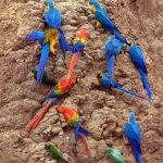 A Rainbow of Birds of Amazon and Andes