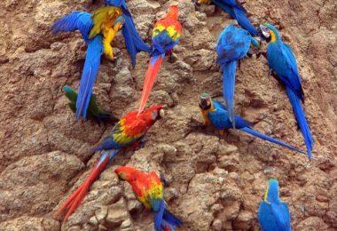 Birds of Amazon