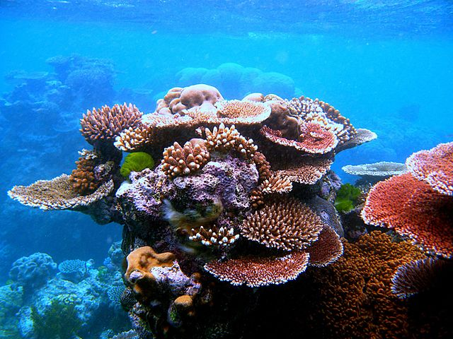 Snorkeling coral