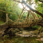 6 Natural Wonders of India