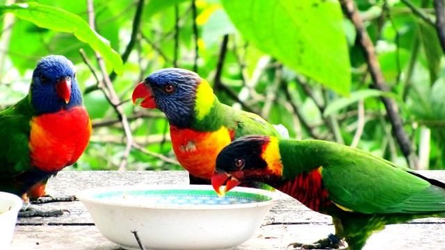 Ecuador Parrots