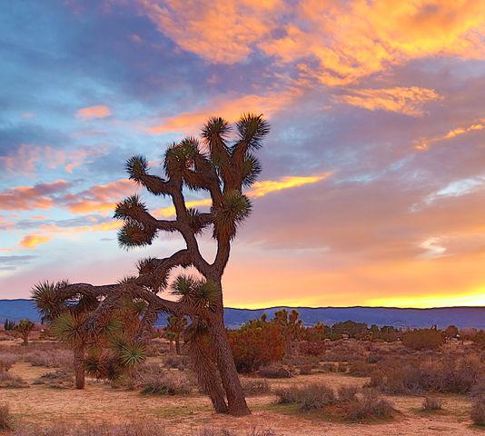 Antelope Valley Desert Town