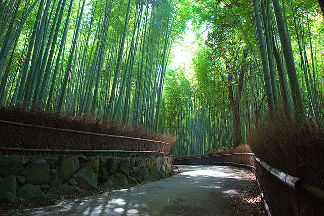 Bamboo path,Buddhist Temples