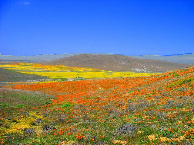 Desert town Antelope Valley