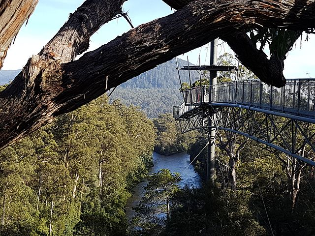 Canopy Walk in Australia 4