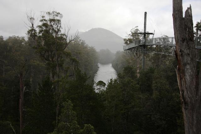 Canopy Walk in Australia, Tasmania