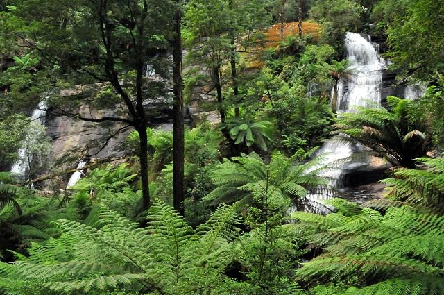 Canopy Walk in Australia, Triplet Falls