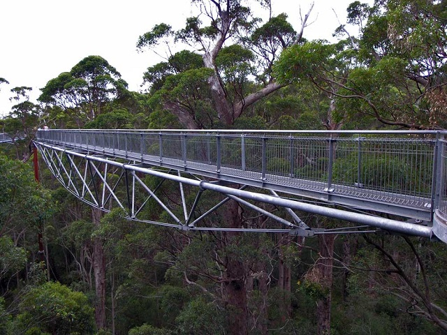 Canopy Walk in Australia
