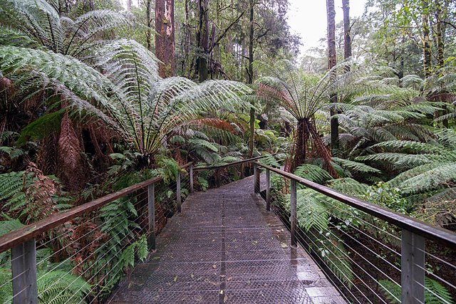 Treetop canopy Walk