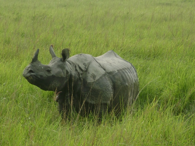 World Heritage Sites Kaziranga National Park