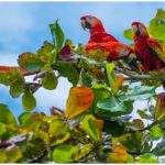 Here Are the Best Bird-Watching Spots in Costa Rica