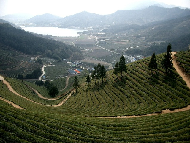 Boseong, South Korea