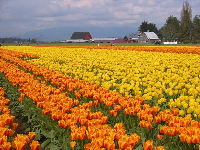 Skagit Valley, United States