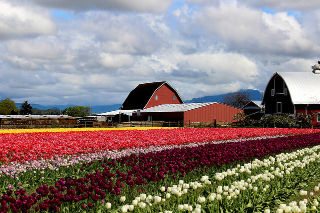 Skagit Valley, Washington