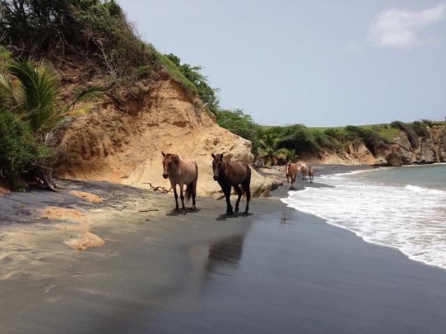 Black sand beaches Playa Negra, Vieques