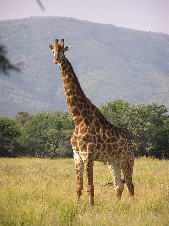 Kalahari Game Reserve, Botswana