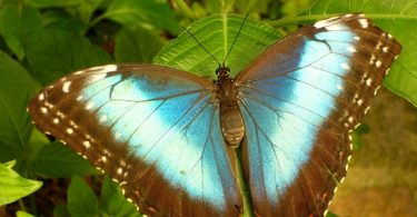 Butterfly Parks in India