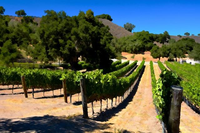 Santa Ynez Wine Valley