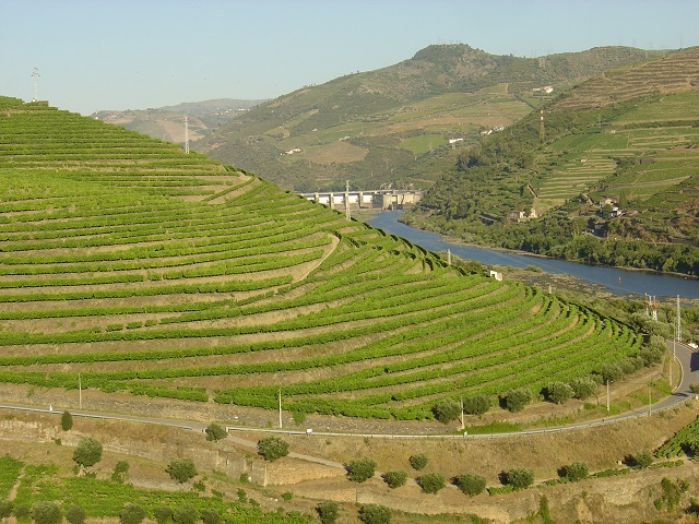 Douro River Cruise-Terraced vineyards