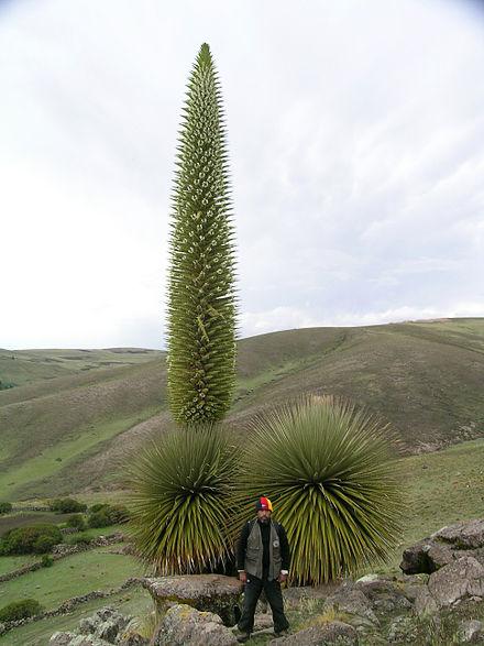 Huascaran National Park, Peru