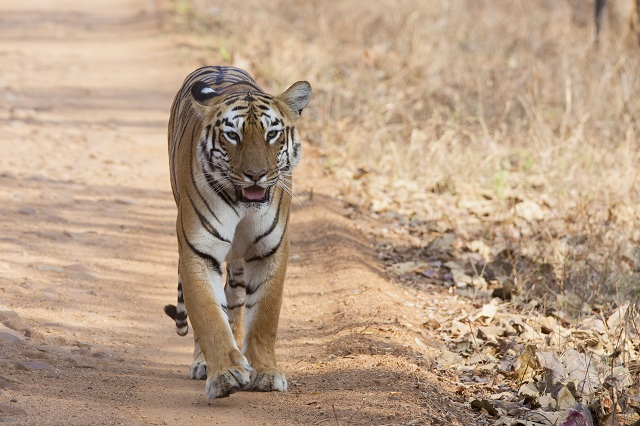 Wildlife Sanctuaries within 100 Km Each in Nagpur