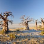 The Ultimate Botswana Travel Guide by View Traveling