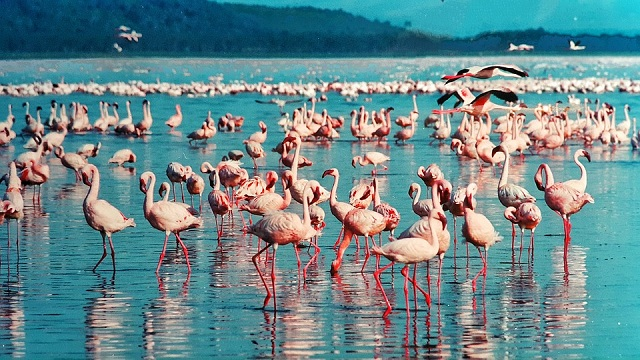 Lake Nakuru-the huge flamingo lake