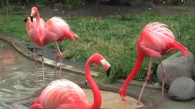 Flamingo Bird Watching Places in Gujarat