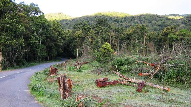 Pampadum Shola Forest