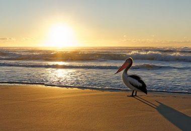 Australian Birds Watching