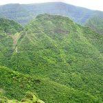 Koyna bird sanctuary: Little known bird sanctuary in Sahyadri Hills