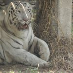 9 Lesser-Known Tiger Reserves in India