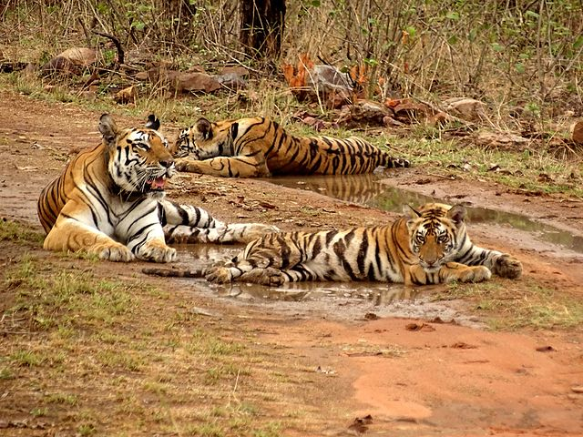 Panna Tiger Reserves in India