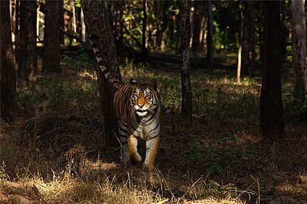 Pench Tiger Reserves in India