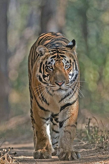 Satkosia Tiger Reserves in India