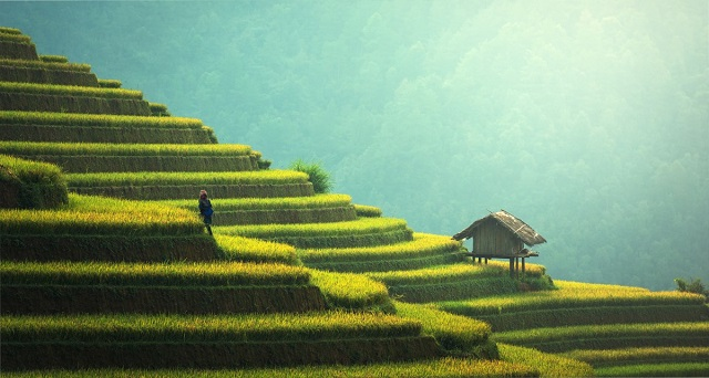 Mae Jam Terraced Rice Fields