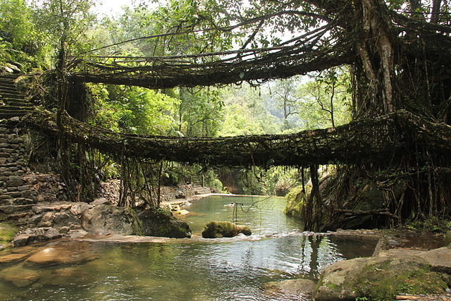 Places to Visit in Meghalaya Mawlynnong