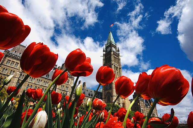 Things to Do at Canadian Tulip Festival, Ottawa
