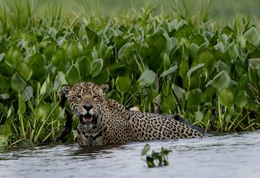 Pantanal Travel: Brazil Wildlife Holidays