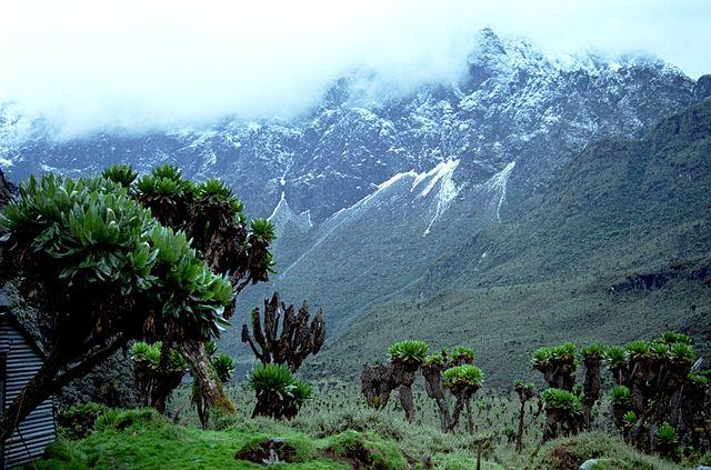 Volcanoes National Park Rwanda Rwenzori