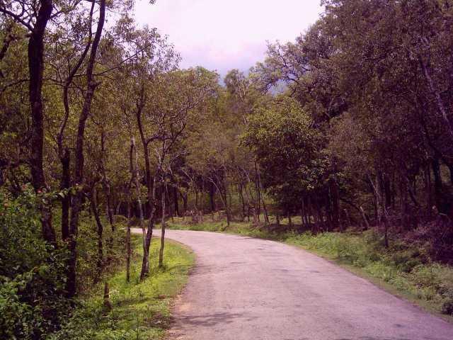 sandalwood forest near Kanthalloor Kerala