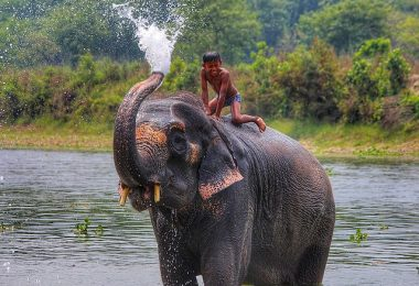 Chitwan National Park: Most Beautiful Place to See in Nepal