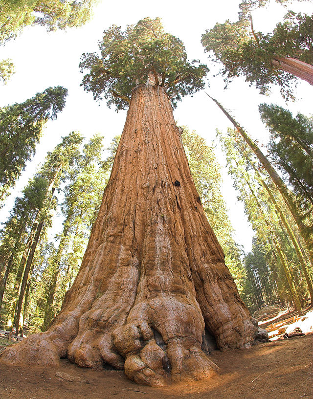 Most Beautiful Places in America General Sherman Tree
